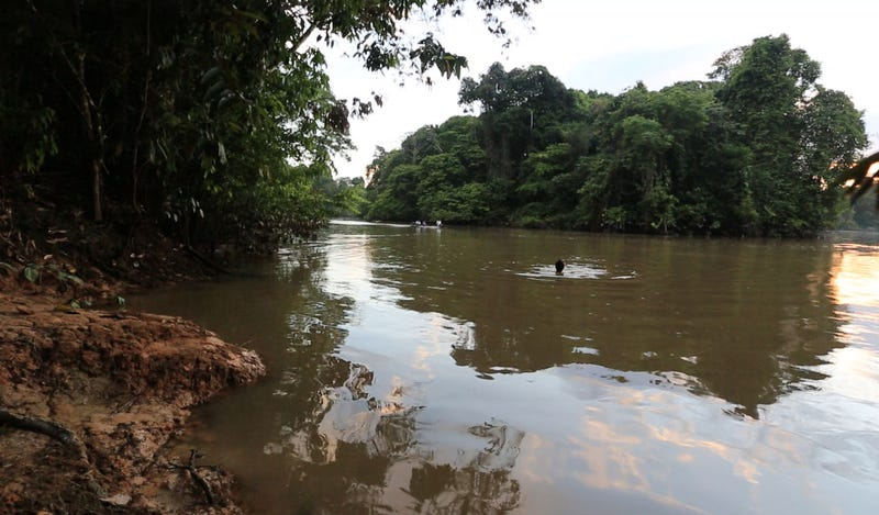 Into The Amazon: What To Do When Attacked By A Poo Bat