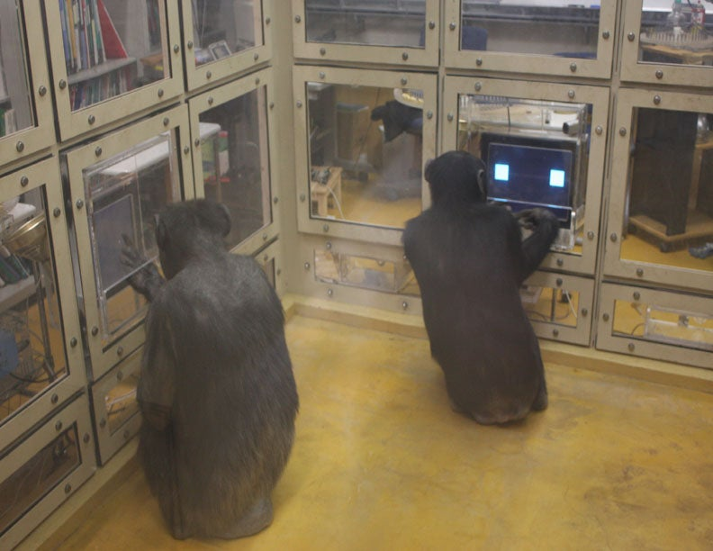 Chimps Are Better at Strategic Reasoning Than Humans Are