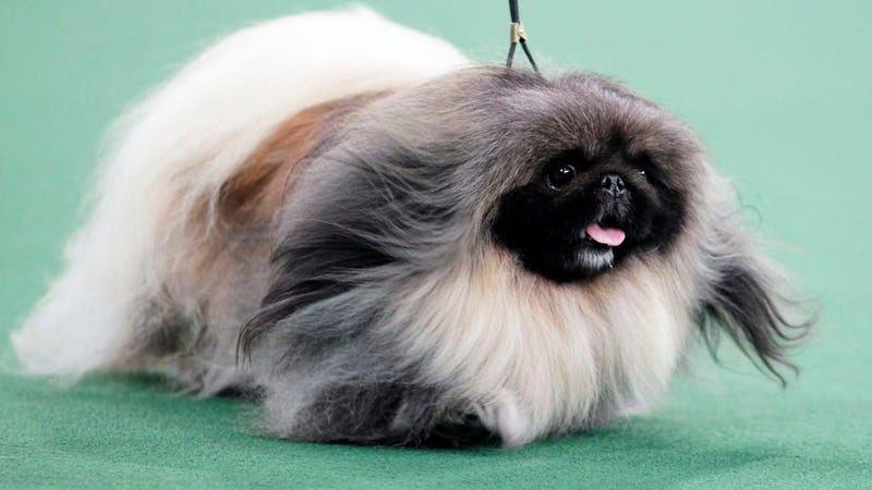 25 Descriptions of the Strange Beast that Won the Westminster Dog Show