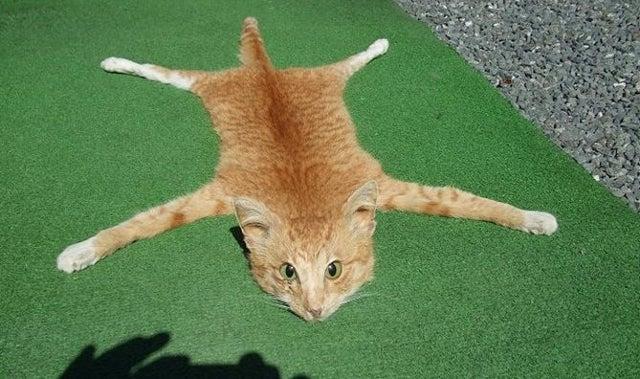 Someone Spent Over 800 Bucks On This Disturbing Cat Skin Rug