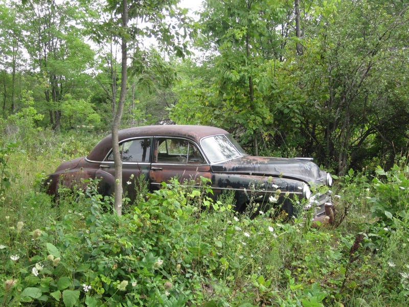 1950 Chevy Continues To Rust In The Wisconsin Weeds