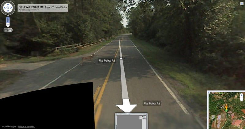 Google Deletes Photos Of Google Maps Car Hitting Non-Google Deer