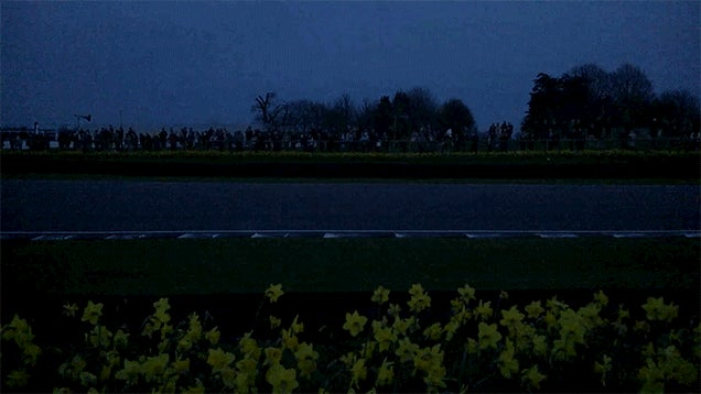 Goodwood's Daffodils At Night