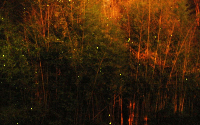 Photographing Fireflies Is Hard.