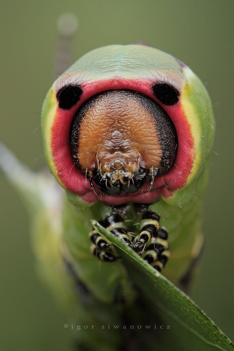 The Strange Cuteness of Insect Portraits