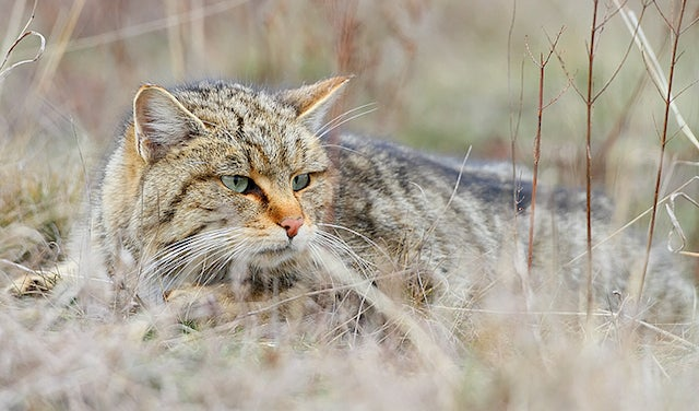 The Mysterious Origins of Cat Domestication in China