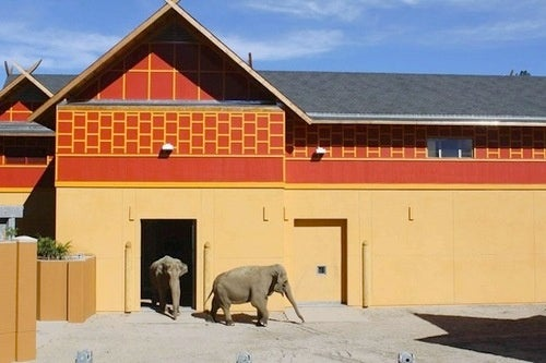 Two Elephants From San Diego Arrive At Los Angeles Zoo