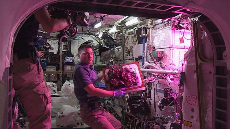 The First Space Flower Bloomed Decades Ago, Not This Week