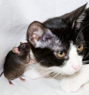 Afternoon News: XM-Sirius Merger Gets Serious, Gas Pumps Lie, and Mice Now Fearless