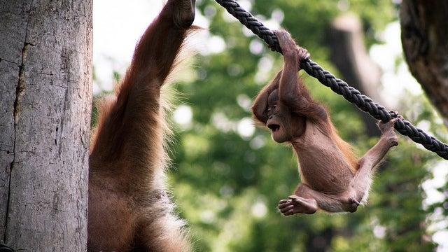 Treat a Career Change Like Tarzan Swinging from a Vine
