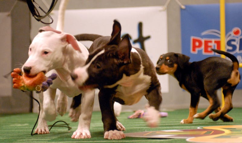 You Can Draft A Fantasy Puppy Bowl Team