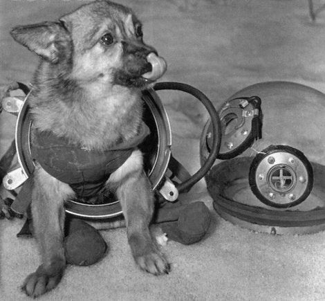Dog space suits for the earliest canine cosmonauts