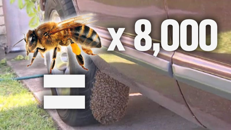 8000 Bees Decide They Really Like Houston Woman's Ram Truck