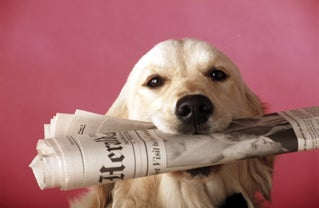 Old Newspapers Had Enough News to Kill a Dog