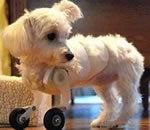 Cutest Bionic Puppy Ever