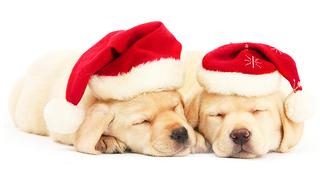 Stormborn Secret Santa '14 Gift Guide!