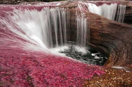 Colombia's Caño Cristales is a river of psychedelic algae