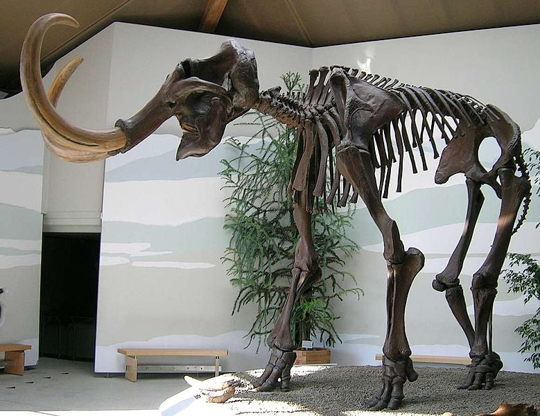 Should We Try To Resurrect Extinct Species?