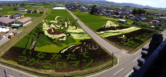 Don't Worry, Japanese Rice Paddy Art Is Still Incredible
