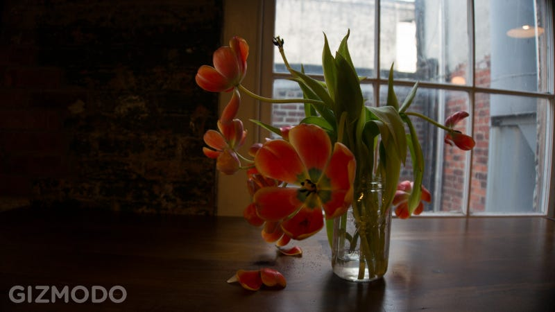Sony NEX-6 Gallery: Sample Images