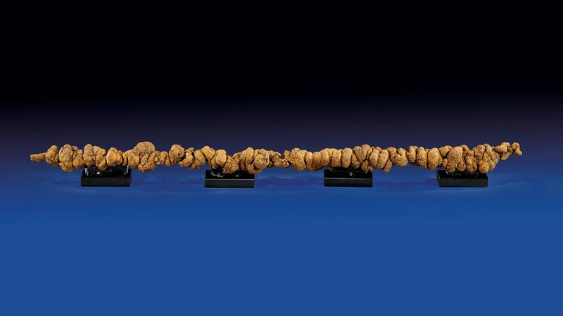 """$10,000 """"World's Longest Dinosaur Poop"""" Is Probably Just a Rock"""