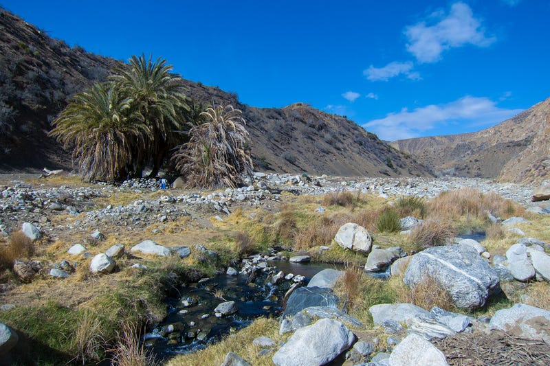 Found: California's Lost Bighorn Sheep