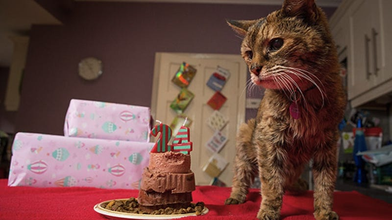 The World's Oldest Cat Has Shuffled Off This Mortal Coil
