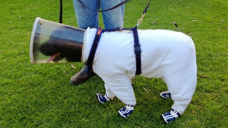 The Dog Beekeeper Suit: A Few Questions and Answers
