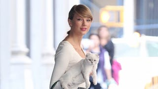 Where Does She Take the Cat