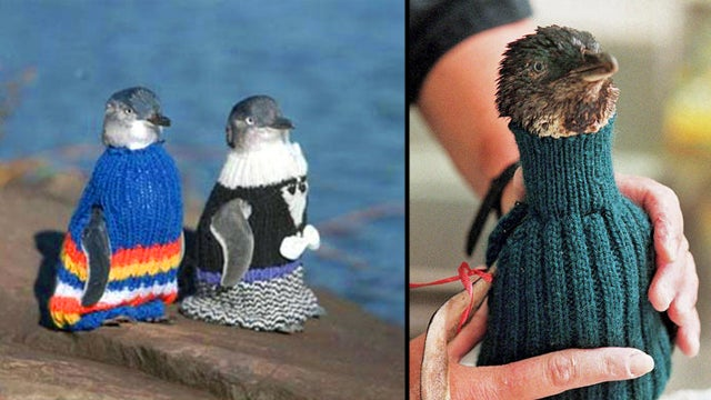 The Worldwide Campaign To Knit Sweaters For Penguins