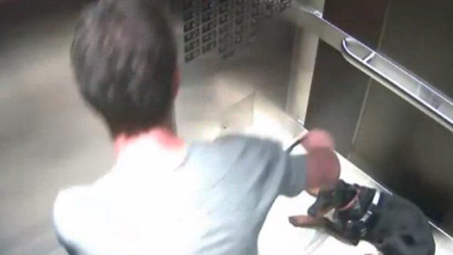 CEO of Major Catering Company Caught On Tape Abusing Dog