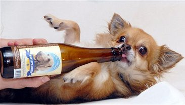 Beer for Dogs: Next Stop, Doggie AA