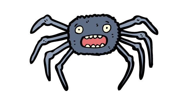 Meet the Spider With the Tiny Detachable Penis