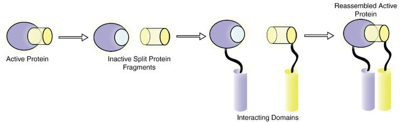 Equipping microbes with protein chimera biosensors