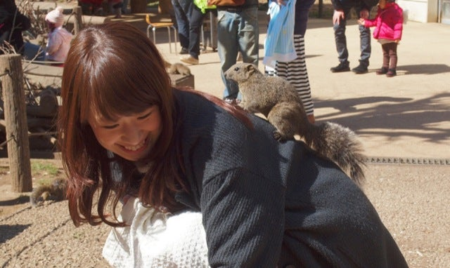 Inside Japan's Squirrel Gardens. Yes, Squirrel Gardens!