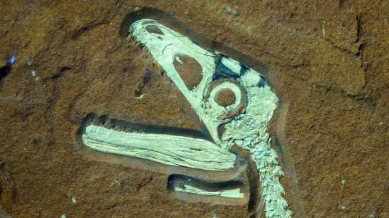 The Most Well-Preserved Dinosaur Skeleton Ever Found in Europe
