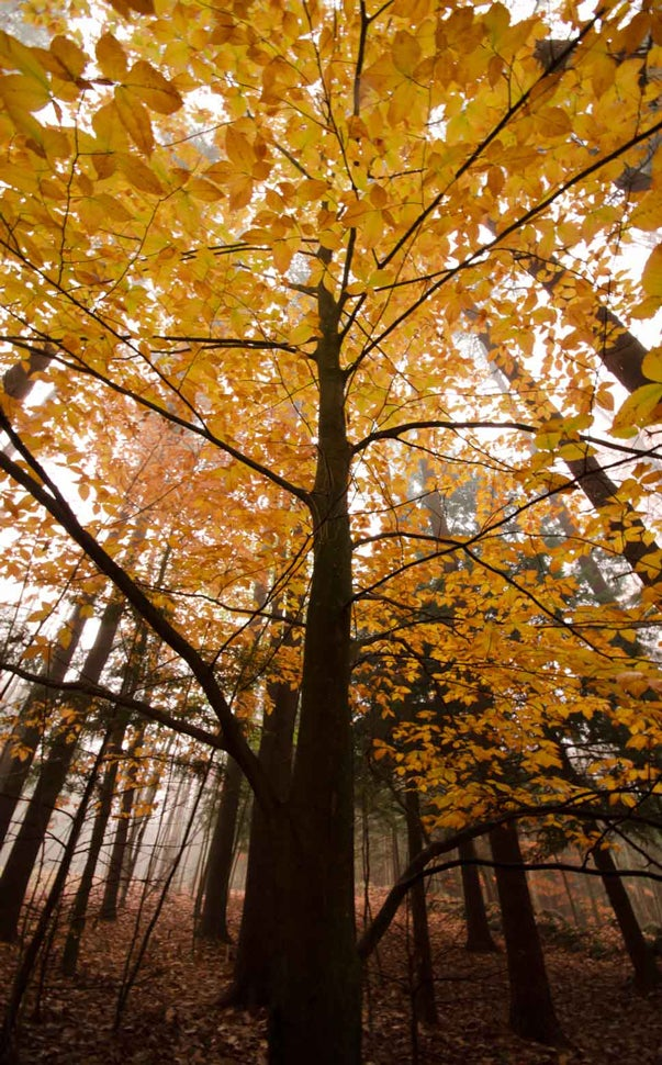 100 Gorgeous Photos Of Fall Leaves