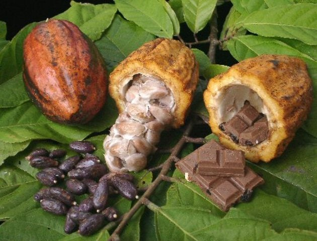 Newly sequenced chocolate genome reveals the secrets of better candy