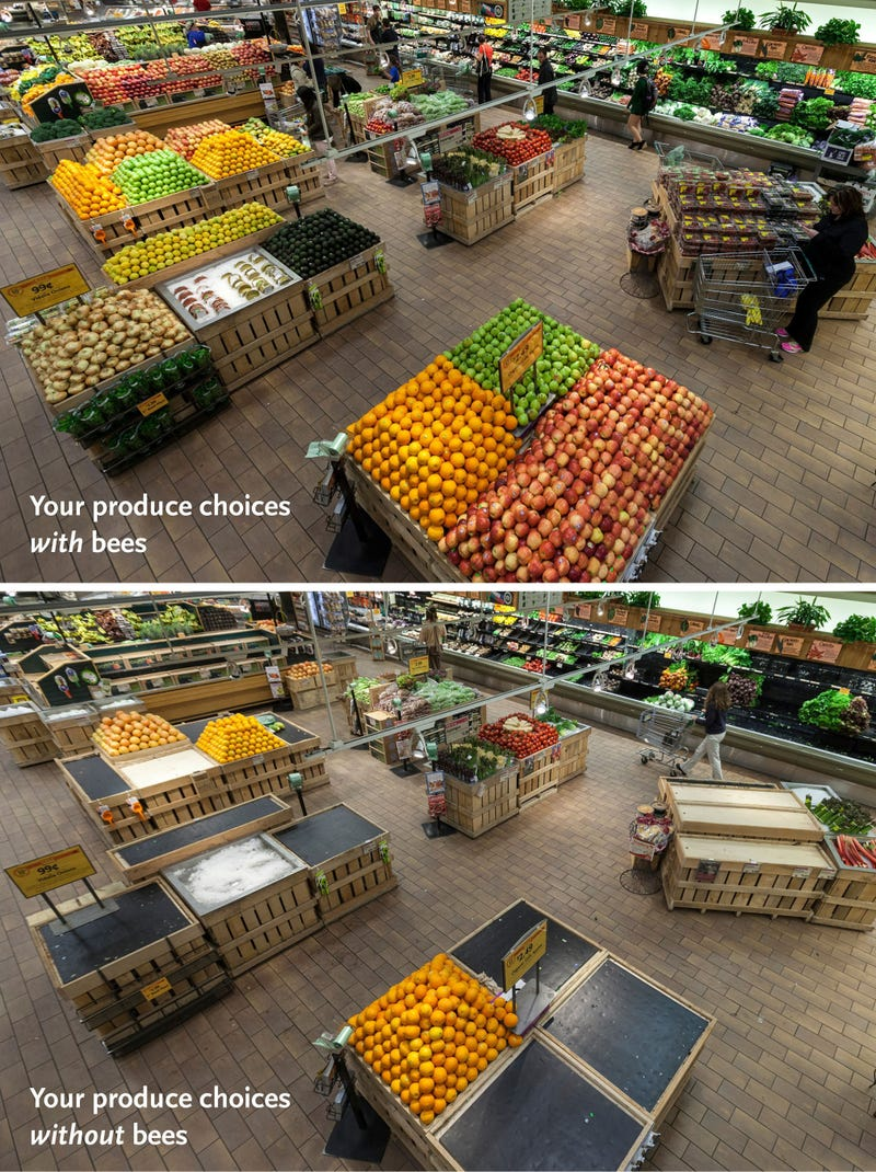 If bees go extinct, this is what your supermarket will look like