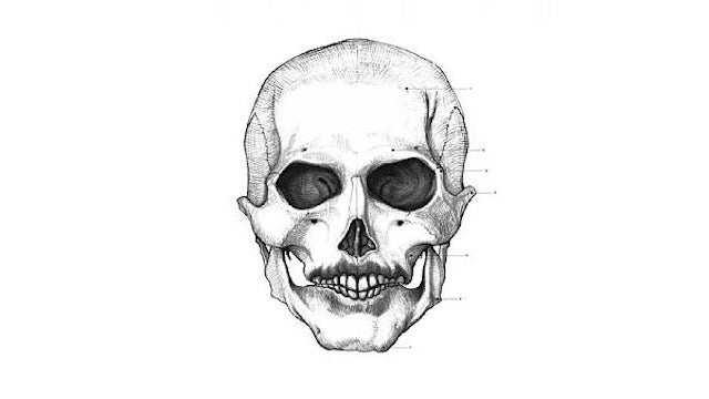 Portraits of 20th century figures — or at least their skulls