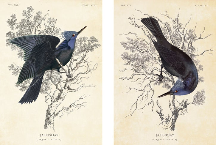 Catching Fire concept art of the Rue mural and Audubon-style Jabberjays