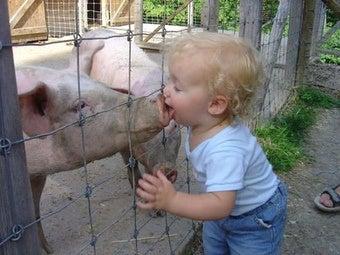New York Swine Flu Cases Confirmed