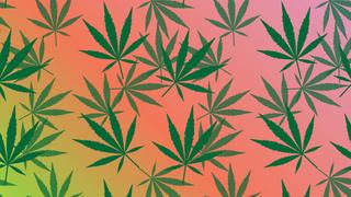 Names For Marijuana, Ranked