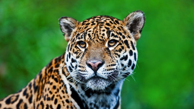 Brazil To Clone Wild Animals In Danger Of Extinction