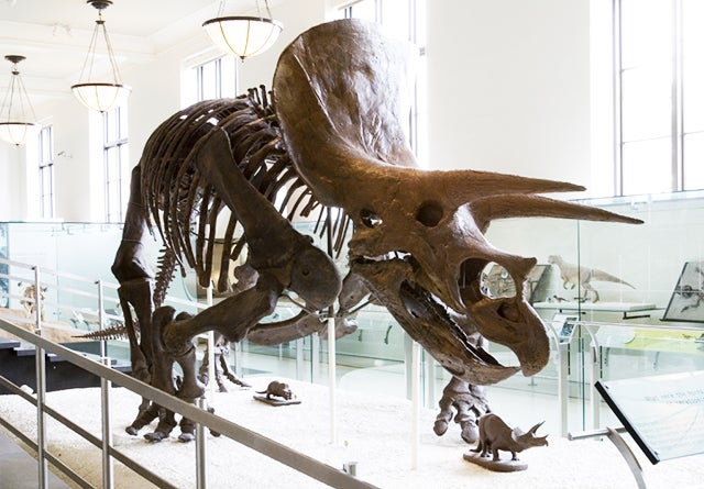 "Dinosaurs Fell Victim to ""Perfect Storm"" of Events, Study Posits"