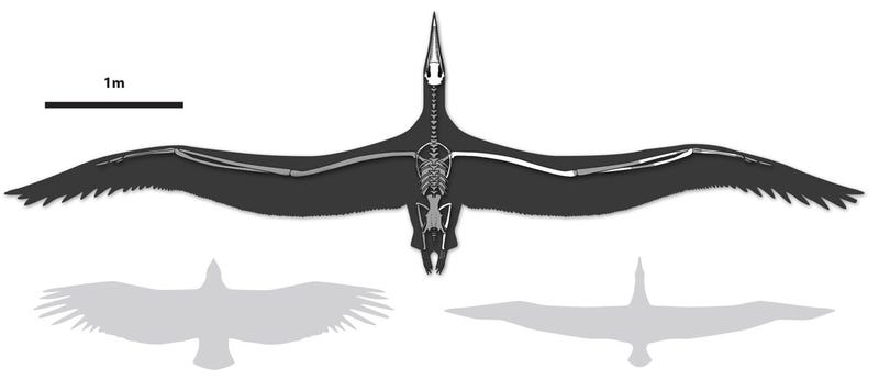 Behold The Largest Bird To Have Ever Flown