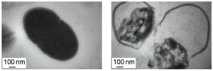 Degradable Nanoparticles Bludgeon Antibiotic-Resistant Bacteria