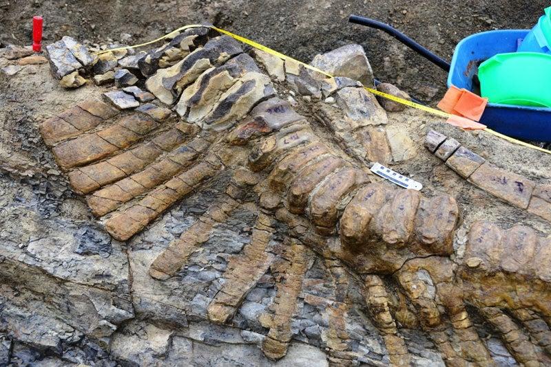 Hallan en México la cola de un dinosaurio de hace 72 millones de años