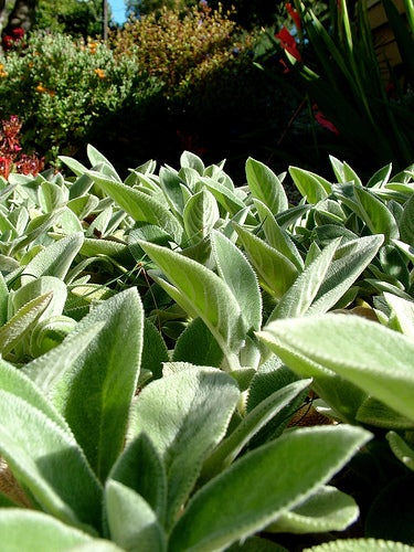 choose plants that need less water for a low maintenance ForLess Maintenance Plants