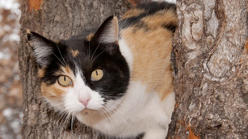 Florida Cat Goes on Real-Life Homeward Bound Catventure without Any Annoying Dogs
